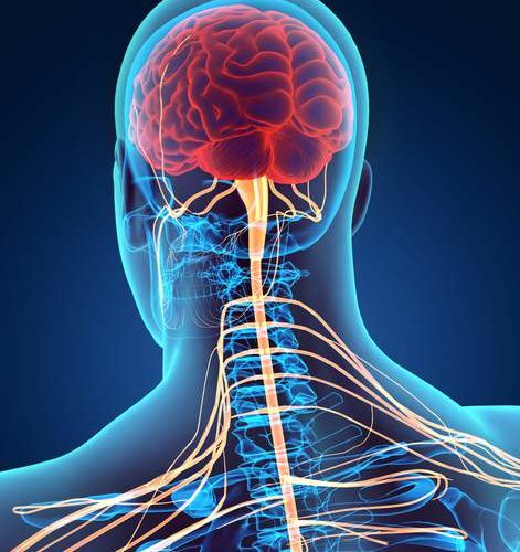 L'importance du nerf vague – Sympatico-Vagal